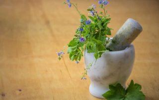 Léčivé rostliny a byliny